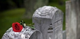 Rose on a gravestone