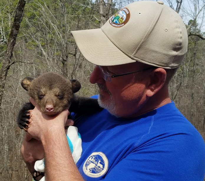 Mike Simmons, the senior transportation manager for the Arkansas Department of Education, is holding a baby cub. Simmons retired from his current position two and a half years ago to work for the Arkansas Game and Fish Commission.