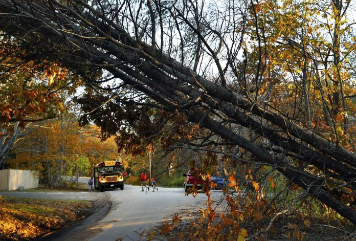 A father walks his child to a school bus at a temporary pick-up location, on Nov. 1, 2017, in Freeport, Maine, where storm-toppled trees made several roads impassable following a bad storm. More than 250,000 Mainers were without power. (AP photo by Robert F. Bukaty.)